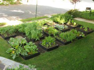 Græsplæne eller køkkenhave?