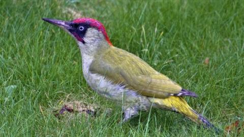 Forår og endnu flere fugle