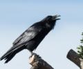 Fugleartlisten fortsætter med at få nye registreringer