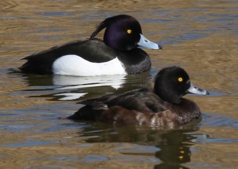 Det er sommer og nye fuglearter fortsætter med at komme til os.